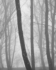 Woodland landscape image on foggy Autumn Fall morning in black and white