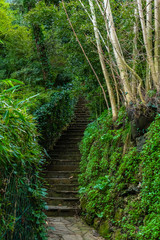 Natural stone stairs leading up among the green plants and trees in Portofino, Liguria, Italy
