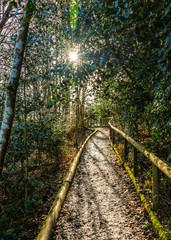 Woodland footpath with sun beams through trees