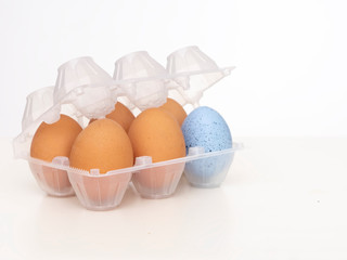 Individuality, uniqueness, difference or diversity concept. One beautiful blue egg in plastic eggbox with normal brown ones. On white background.