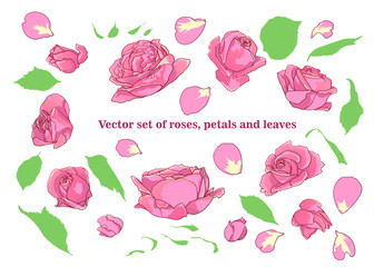 Vector set of roses, petals and leaves