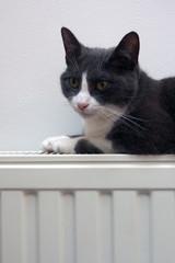 Katze auf Heizkörper, Heizung