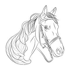 horse black white head. symbol of freedom