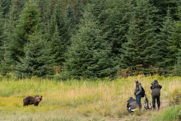 Photographers taking pictures of brown bear;  Alaska