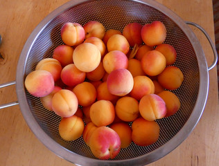 Ripe apricots in sieve