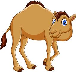 Cartoon camel isolated on white background