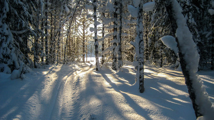 Ski trail in the middle of the forest