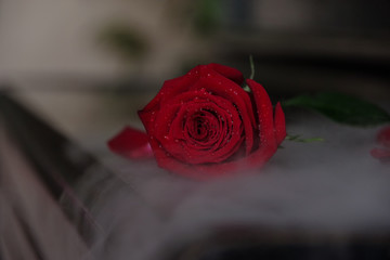 red rose on old black piano in fog
