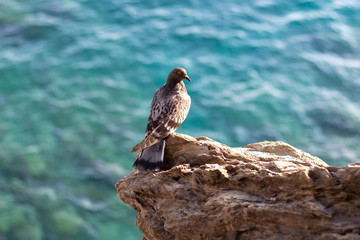 Seagull on a Rock Perch