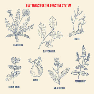 Best herbs for aid digestion