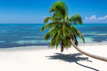 Exotic island. Sunny beach with white sand, palm and turquoise sea.