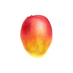 watercolor drawing mango