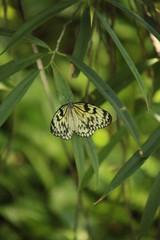 farfalla gialla con dettagli neri poggiata su delle foglie