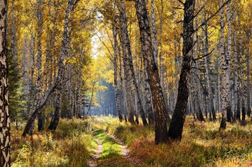 Autumn in the Ural forest