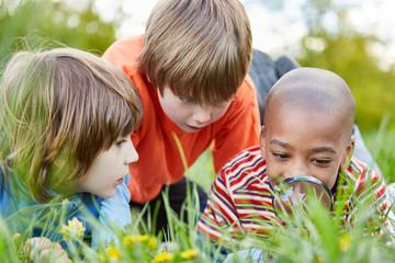 Kinder als Forscher mit Lupe betrachten eine Blume