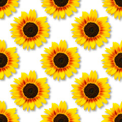 Sunflower seamless background.