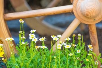 봄 풍경 봄 꽃 초록 식물 백그라운드 사진 이미지