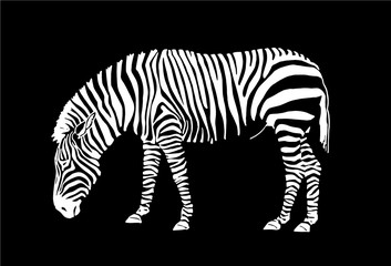 Graphical zebra isolated on  black background,vector illustration for tattoo and printing