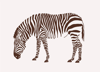 Graphical zebra ,vintage background,vector illustration for tattoo and printing