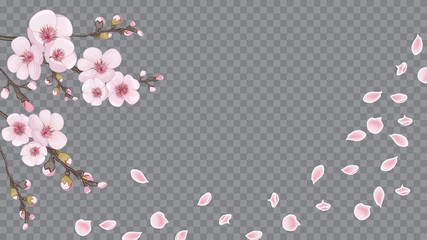 Pink on transparent fond. Flying sakura flowers. Theme design fabric, invitations, packaging, cards. Handmade background in Chinese style.