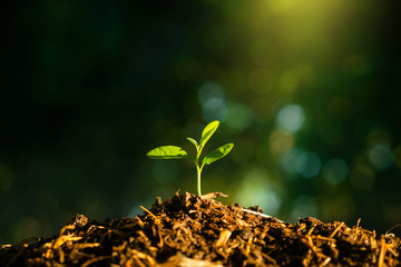 Seedling are growing in the soil with water drops and sunlight. Planting trees to reduce global warming.