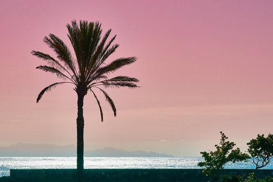 Palm babassu sunset sky background.