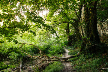 Morning summer forest with bright greenery and forest path leading among the trees