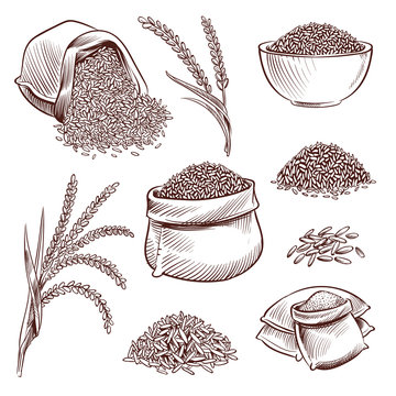 Hand drawn rice. Doodle sack and. Sketch rice ears vector set. Illustration of natural rice grain, seed in sack