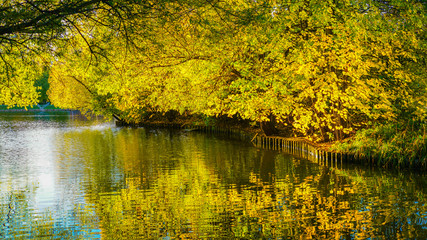Warm sunny autumn in the city pond. The trees look like a mirror in the water.