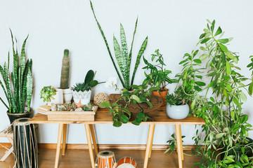 Plants in pots. Indoor plants in a modern cozy interior.