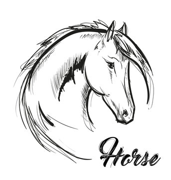 horse head profile sketch vector graphics. Hand drawn vector illustration