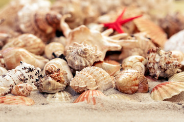 Seashells and red seastars on the sand, summer beach background with copy space for text.