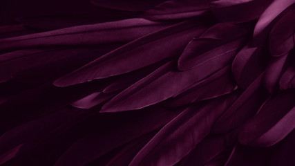 Exotic texture feathers background, closeup bird wing. Burgundy dark red feathers for design and pattern. Fotoväggar