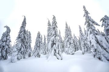 Trees covered with snow in the mountains, winter forest and mountain landscape.