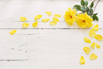 yellow roses on white wooden background