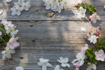 white apple flowers on old wooden background
