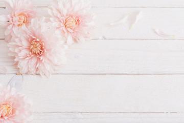 chrysanthemum on white wooden background