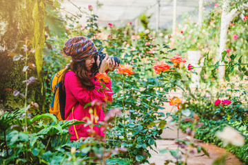 woman travel nature taking photographs in the rose garden at doi Inthanon Chiangmai in Thailand..