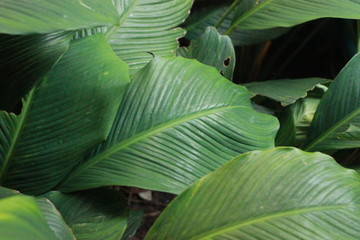 textured lush dark green leaves in a shadowy tropical garden
