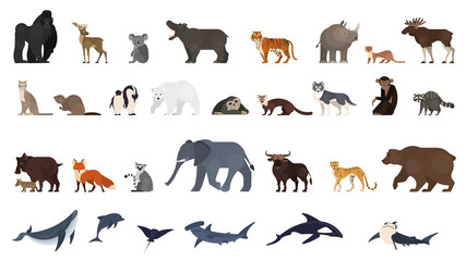 Animal set. Collection of exotic and wild animals Wall mural