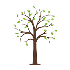tree in spring with first green leaves on white background vector illustration EPS10