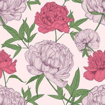 Floral seamless pattern with beautiful peony flowers hand drawn on light background