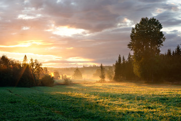 Tranquil foggy grassland and trees at sunrise
