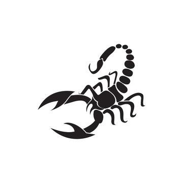 Scorpion Vector Illustration