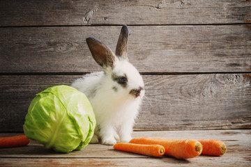 little rabbit with vegetables on wooden background