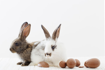 rabbits with chocolate eggs on white background