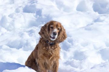 The dog - faithful friend