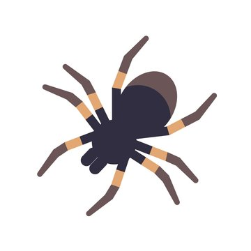 Tarantula isolated on white background. Domesticated tropical venomous spider or dangerous arachnid. Weird exotic carnivorous domestic animal. Colorful vector illustration in flat cartoon style.