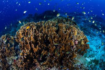 Keuken foto achterwand Koraalriffen Hard Coral on a beautiful tropical reef in the Andaman Sea