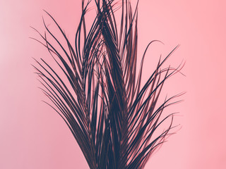 Tropical plant decor concept. Palm leaves on coral colored background.